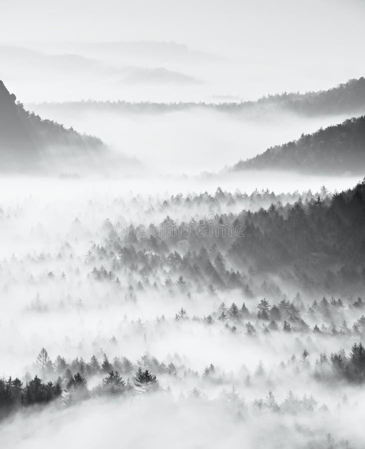 Marzycielski mglisty lasu krajobraz Majestatyczni szczyty starzy drzewa ciąca oświetlenie mgły dolina Głęboko folują kolorowa mgł zdjęcie stock