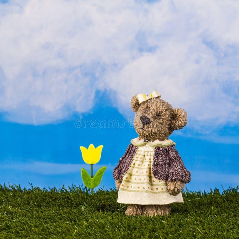 Marzycielski niedźwiedź z tulipanem na niebieskiego nieba tle, zdjęcia stock