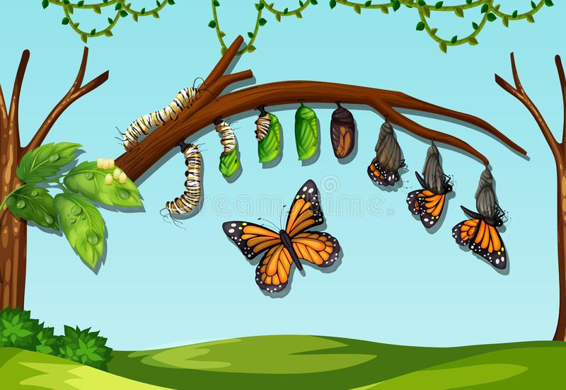 Masło komarnicy etap życia royalty ilustracja