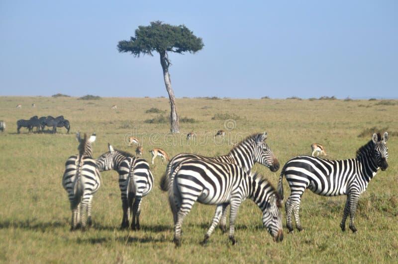 Masaai royalty-vrije stock fotografie