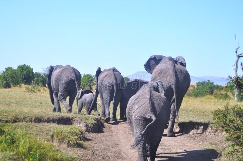 Masaai Mara stock fotografie