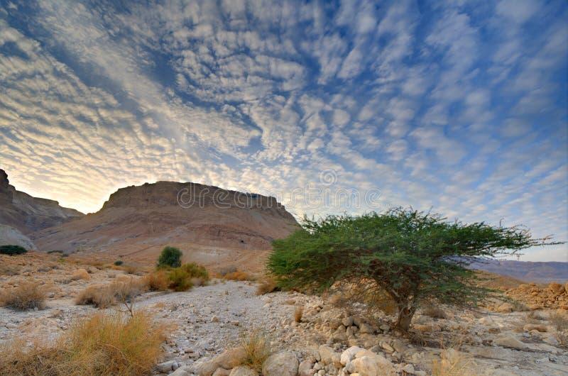 Masada stock afbeelding