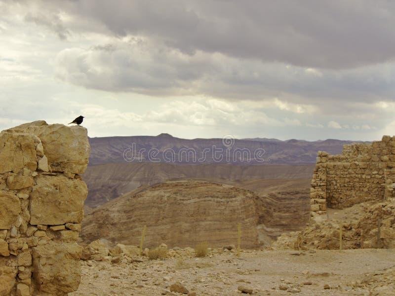Masada fästning med fågeln arkivbild