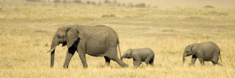 Masai Кении Mara африканского слона Стоковое Изображение