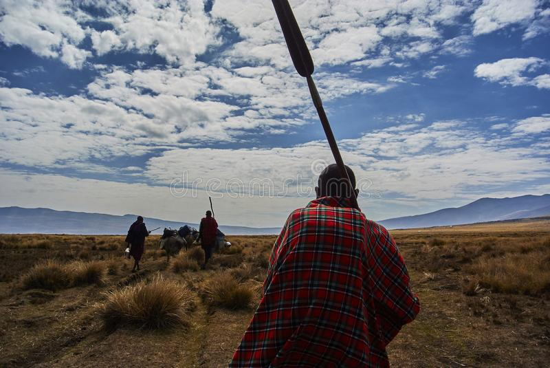 Masai guide hike in the mountains. Hike in Ngorongoro Conservation Area Nationnal park Highlands craters en route for Bulati Village from Nainokanoka with Masai royalty free stock image