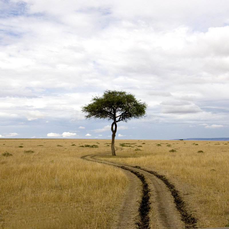 Masai mara images stock