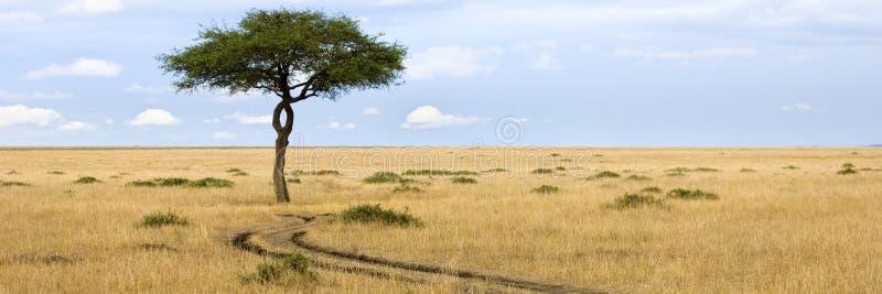 Masai mara royalty-vrije stock afbeeldingen