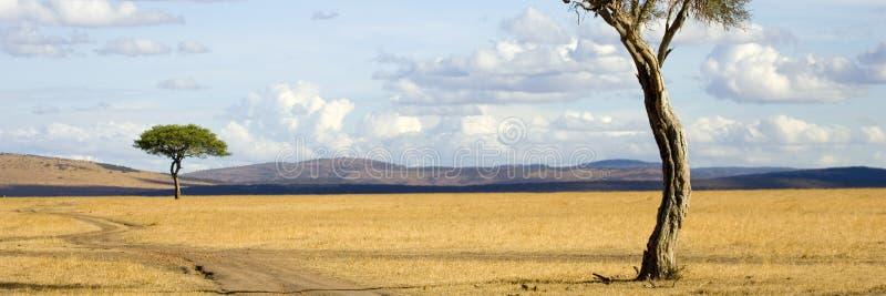 Masai mara immagine stock libera da diritti