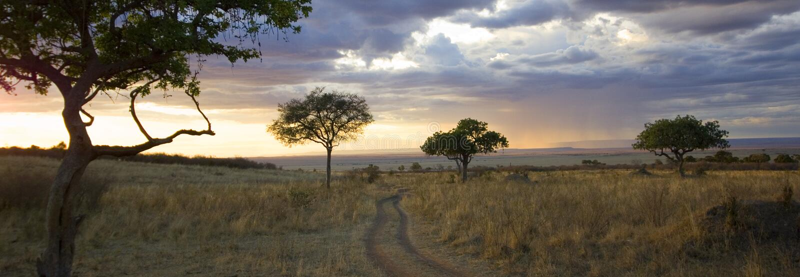 Masai mara royalty free stock image