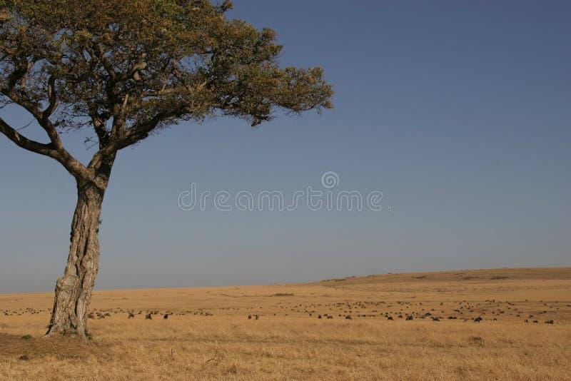 masai mara стоковое изображение