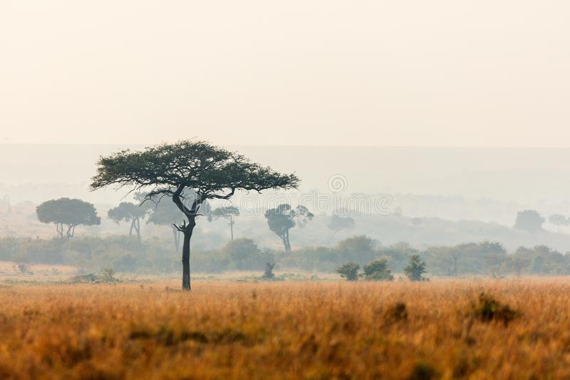 Masai Mara bij zonsondergang stock fotografie