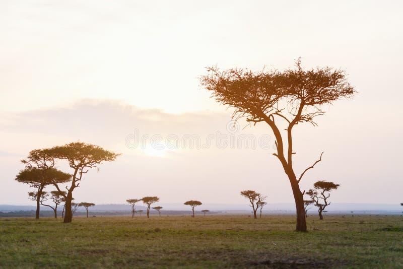 Masai Mara bij zonsondergang royalty-vrije stock foto's