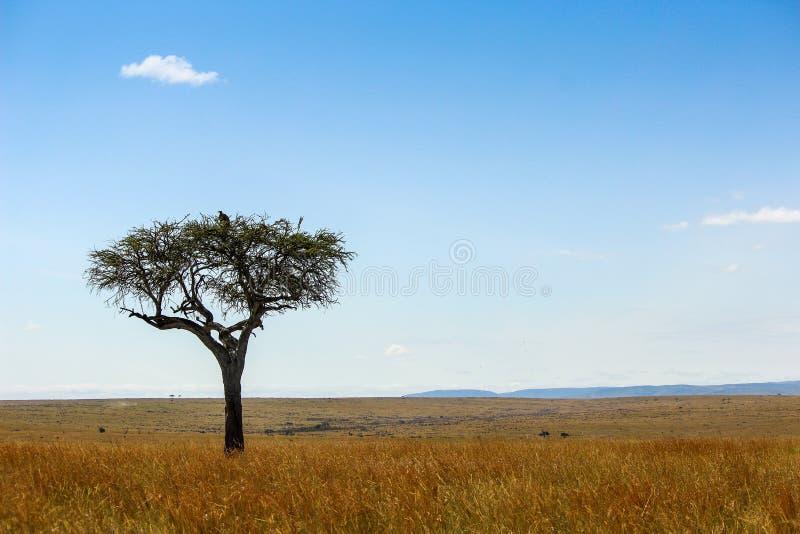 Masai Mara Landscape fotos de stock royalty free