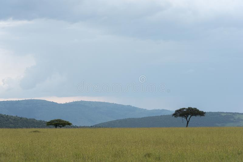 Masai Mara landscape on a cloudy day stock image