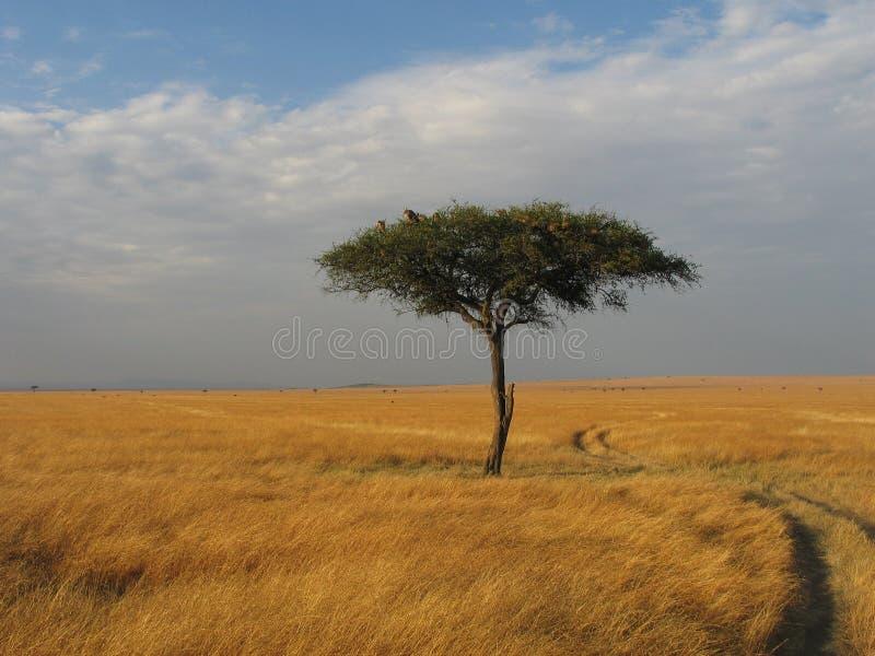 Masai Mara Scenic Landscape imagens de stock