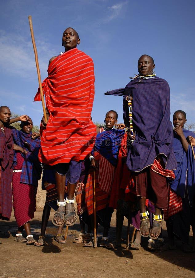 Masai que executa a dança do guerreiro. fotos de stock