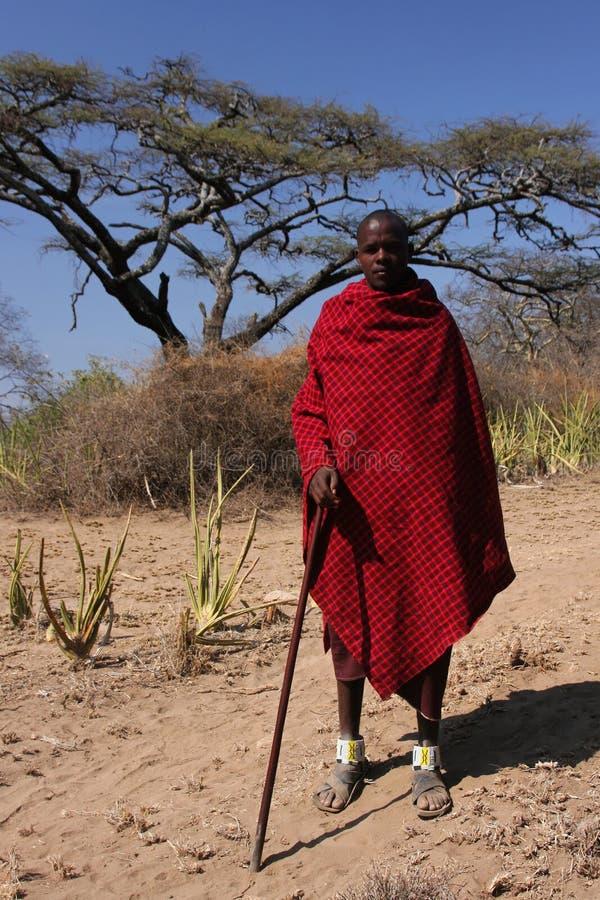 Masai sheperd
