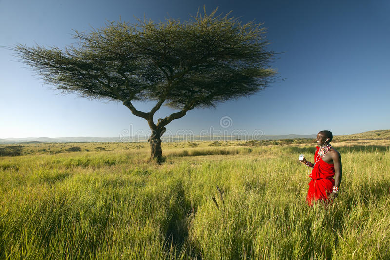 Masai Warrior near Acacia Tree listening to music on iPod by Apple in red surveying landscape of Lewa Conservancy, Kenya Africa stock image