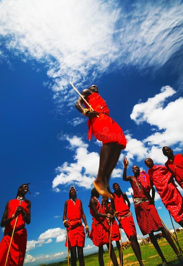 Masai warriors dancing traditional jumps royalty free stock photography