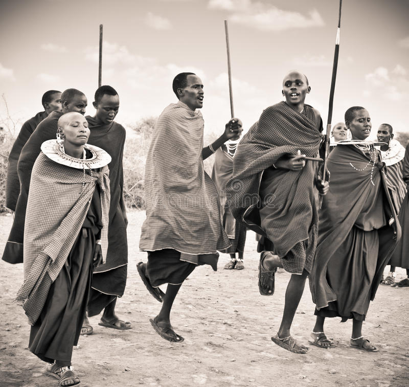 Masai warriors dancing traditional jumps as cultural ceremony, royalty free stock image