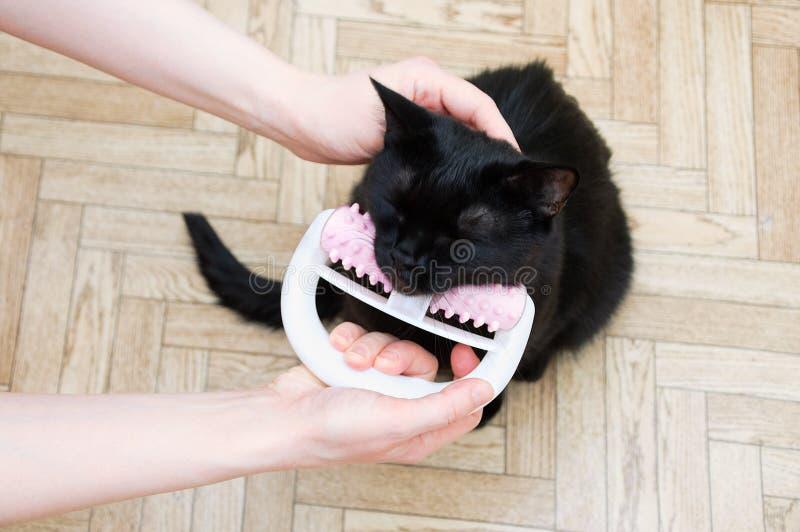 Masaje para un gato negro con el massager del rulo de plástico foto de archivo