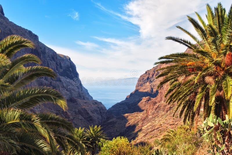 Masca Gorge, Tenerife stock photography