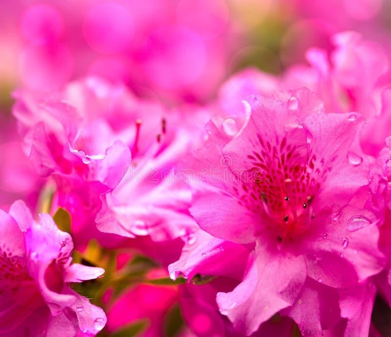 Maschera del bokeh del fiore immagini stock