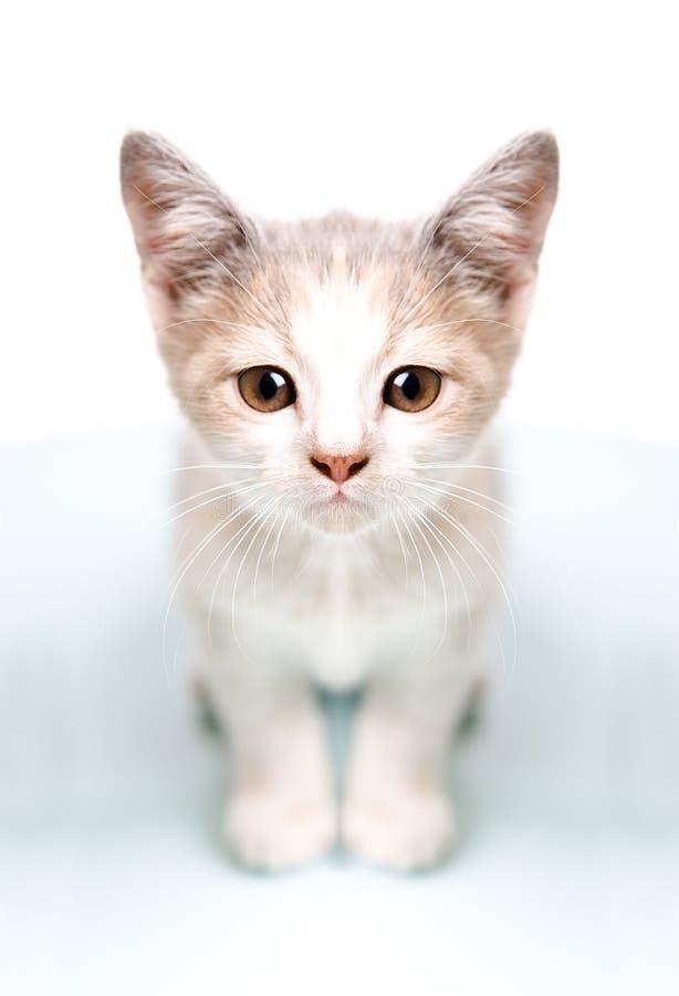 Maschera del gattino sveglio premuroso fotografie stock libere da diritti