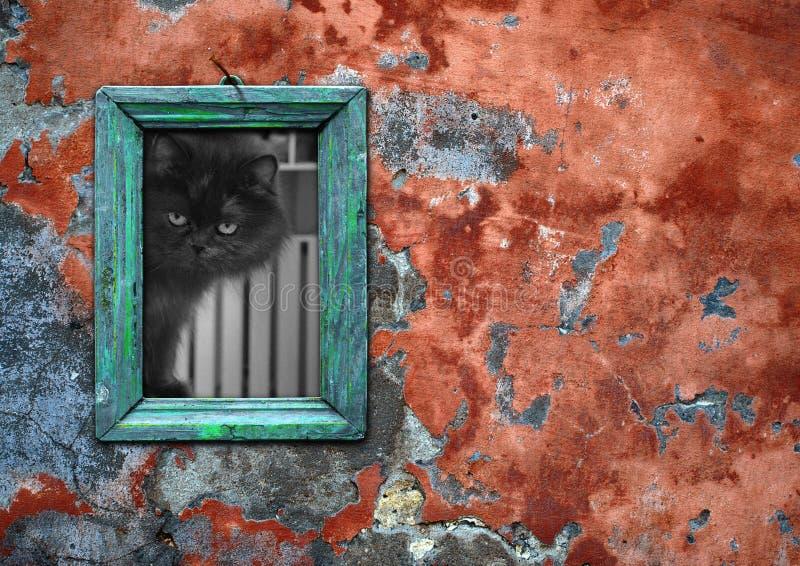 Immagine di un gatto fotografie stock