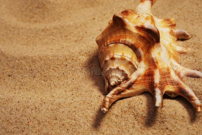 Maschera di un seashell che pone su una sabbia immagini stock