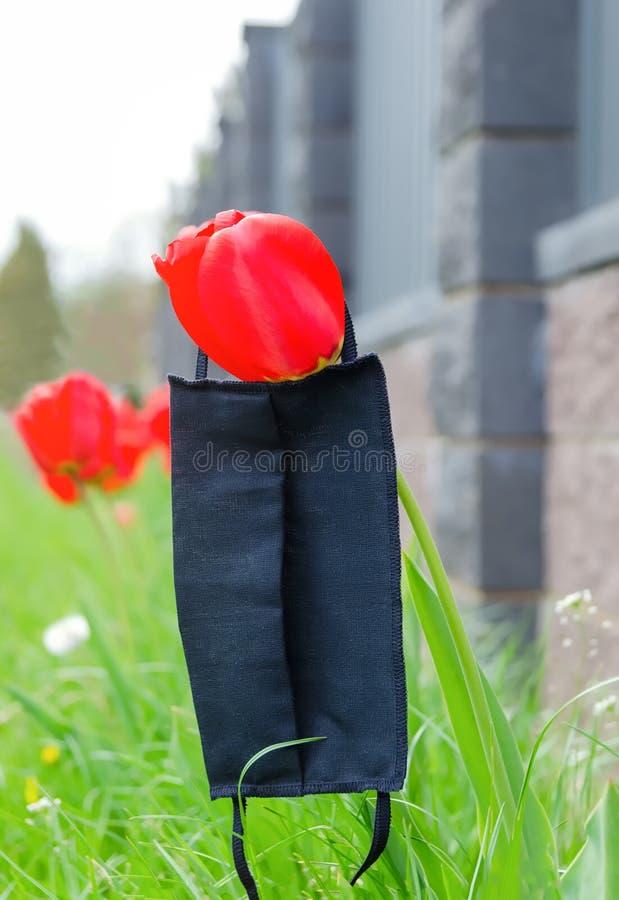Maschera medica nera sdraiata sul fiore dei tulipani fotografia stock libera da diritti