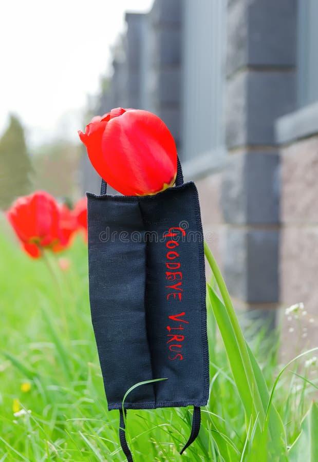 Maschera medica nera sdraiata sul fiore dei tulipani fotografia stock