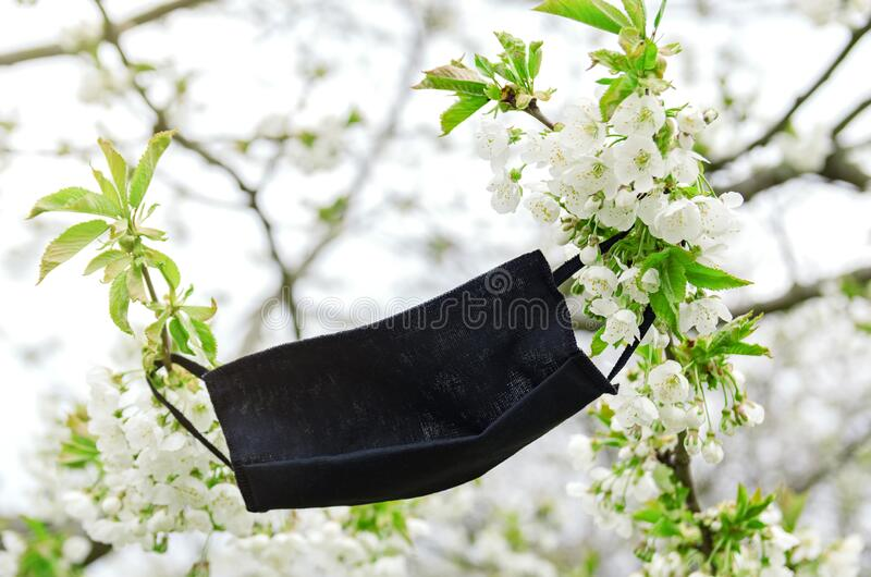 Maschera medica protettiva sul ramo in fiore fotografia stock