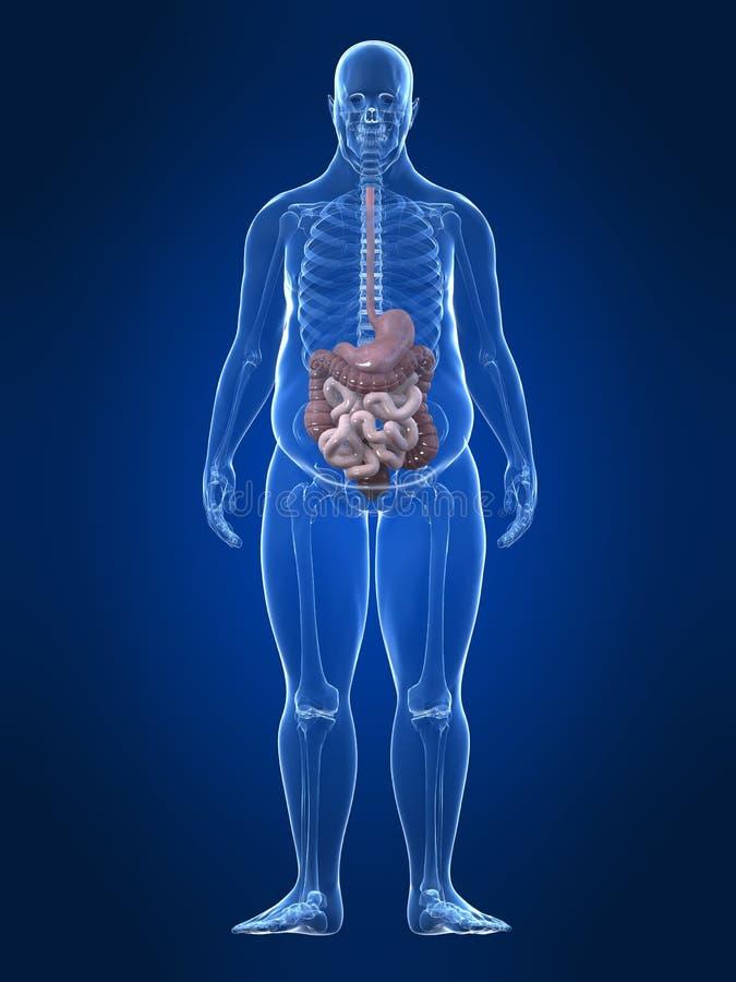 Maschio di peso eccessivo - sistema digestivo illustrazione di stock