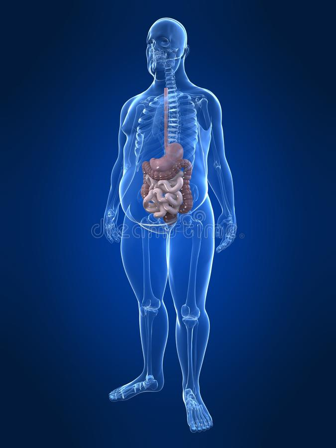 Maschio di peso eccessivo - sistema digestivo royalty illustrazione gratis