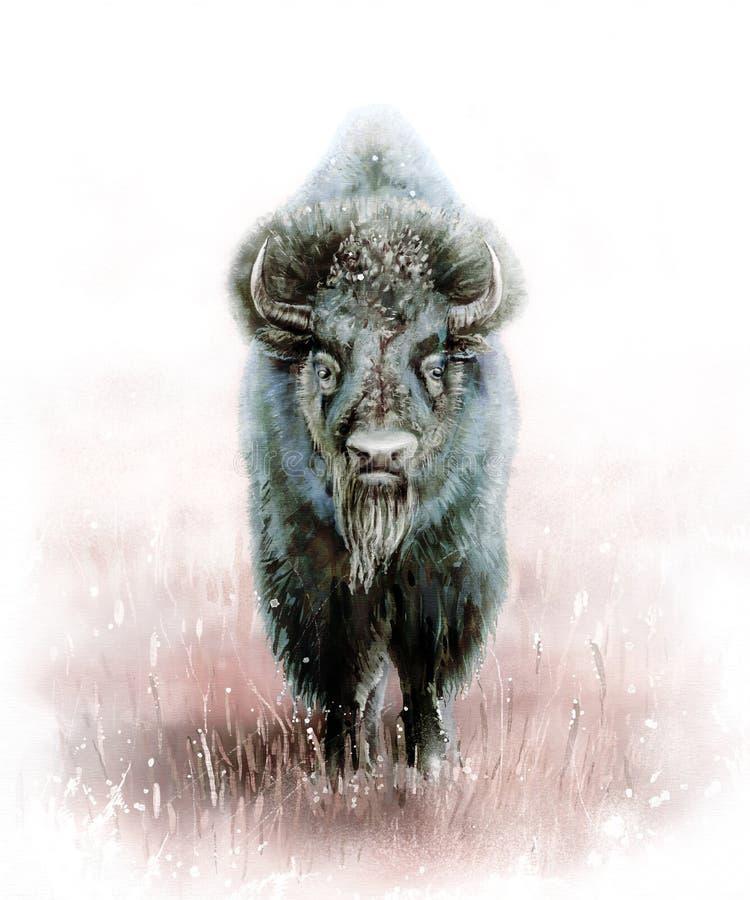 Maschio selvaggio del bisonte immagine stock