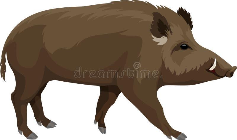 Mascota salvaje del verraco del cerdo del vector stock de ilustración