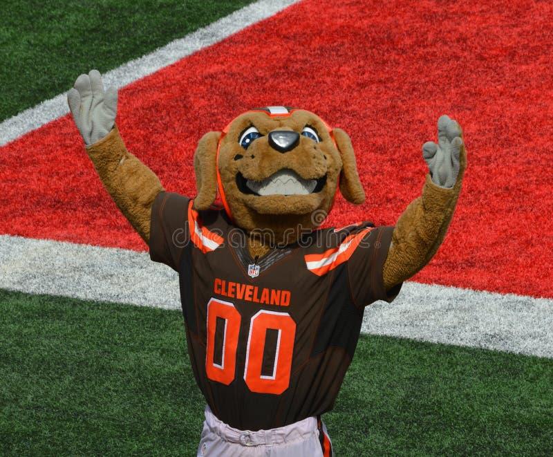 Mascotte de NFL de mastications bruyantes Cleveland Browns photographie stock