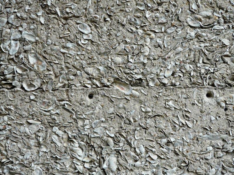 Masern Sie Hintergrund der Auster Shell Tabby stockfotografie