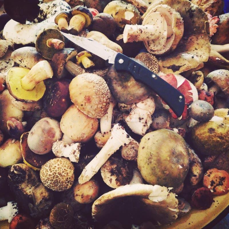 Mashrooms刀子木头狩猎 免版税库存照片