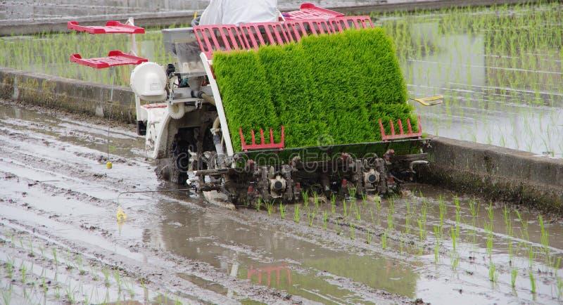 maskin som planterar rice royaltyfri bild