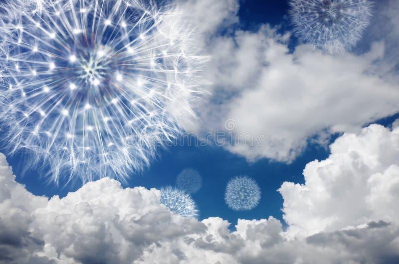 Maskros mot den blåa himlen i molnen Blowballflugan i vinden och symboliserar lätthet av lynnet och lätt lägga-baksida bakgrund arkivfoto