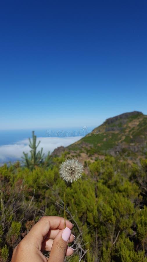 Maskros Mountain View fotografering för bildbyråer