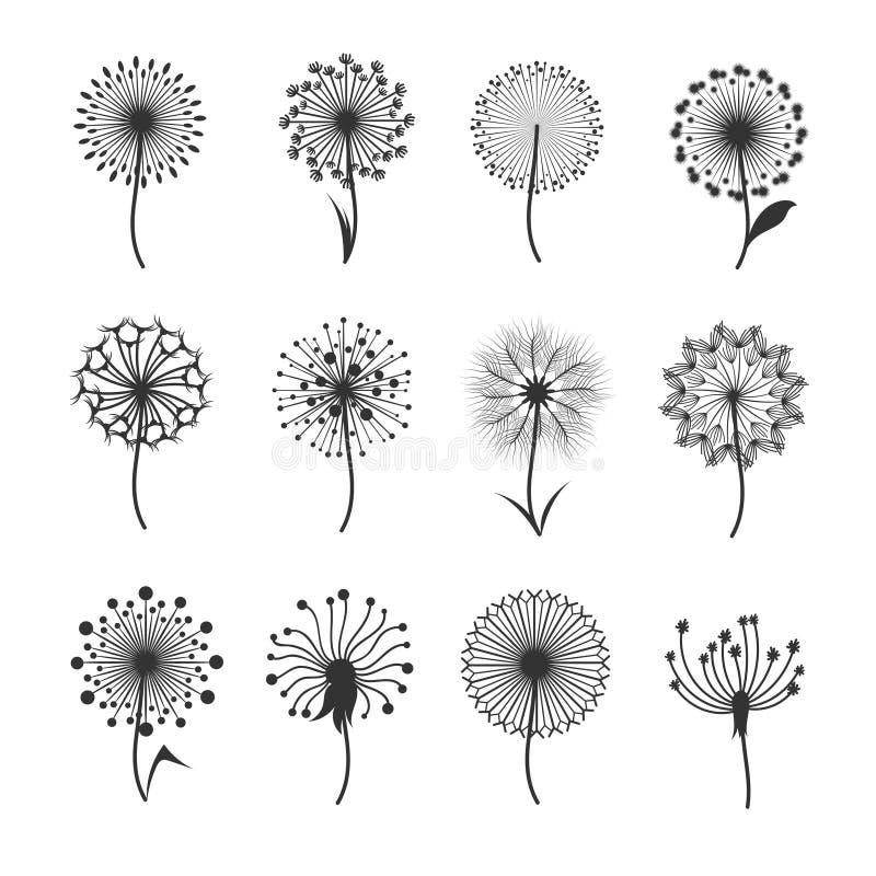 Maskrosblommor med fluffigt frö svärtar blom- vektorkonturer som isoleras på vit vektor illustrationer