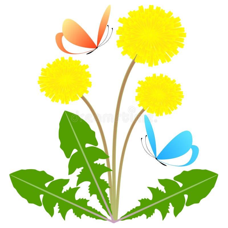 Maskrosblommor med gräsplansidor och fjärilar på en vit bakgrund stock illustrationer