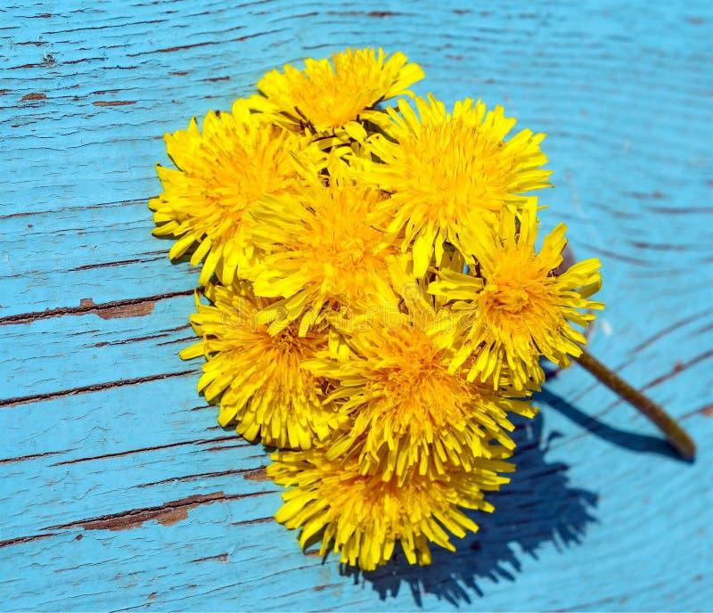 Maskrosen blommar på träbakgrund royaltyfri fotografi