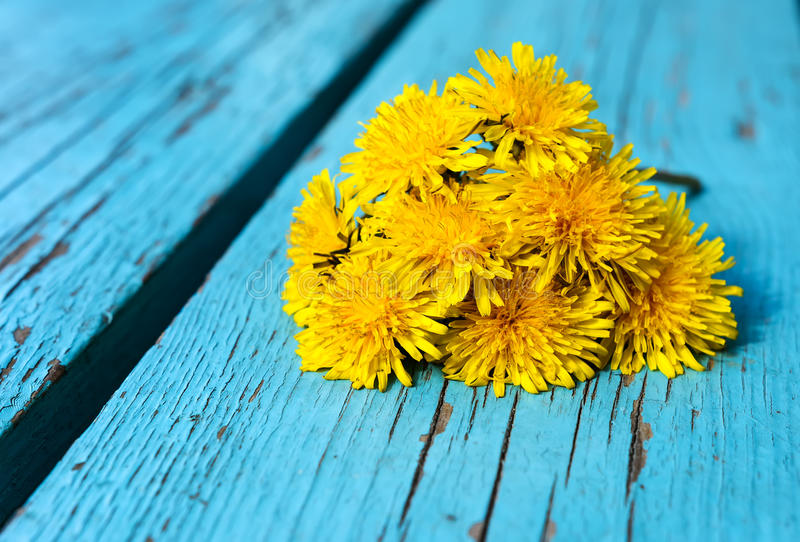 Maskrosen blommar på träbakgrund royaltyfri bild