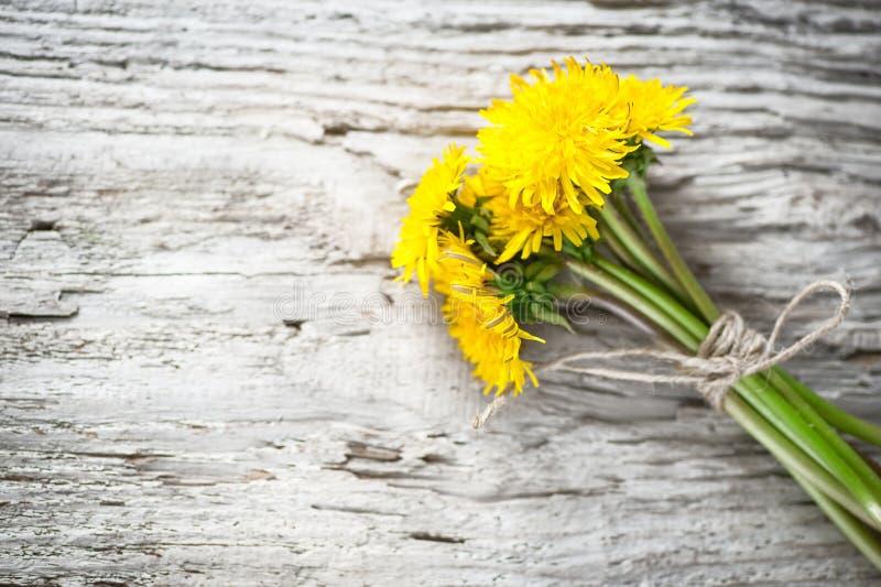 Maskrosen blommar på träbakgrunden arkivfoto
