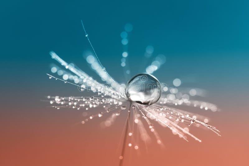 Maskrosfrö med en droppe av vatten på en röd akvamarinbakgrund En härlig konstnärlig bild royaltyfri foto
