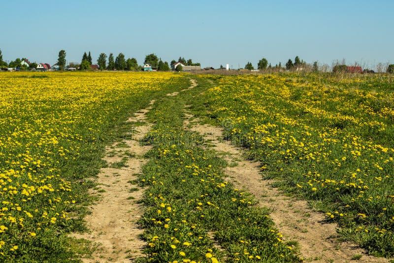 Maskrosor gulnar vägen för lantgården för blå himmel för sommar för blommafältet royaltyfria bilder